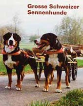 швейцарские зенненхунды