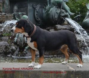 Ariadna-Nurnberg