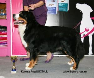 Romul-2008a