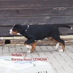 Udacha1